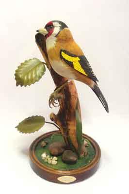 Goldfinch, 250 x 170mm (PHOTOGRAPHS BY TERRY EVERITT)