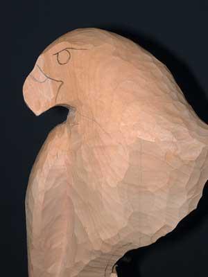 Mark the eye, brow ridge and beak areas