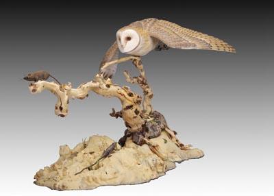 Barn Owl by Chau Pham