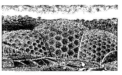 Eden, by Dan Dennison