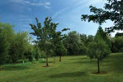Woodland, nature and wildlife area