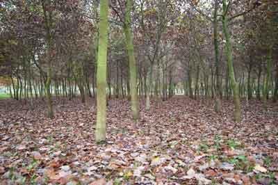 Merchant Navy Wood in Autumn
